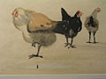watercolour Cocks and Hens [Click here to see more information about this item]